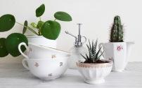 DIY-succulente-2