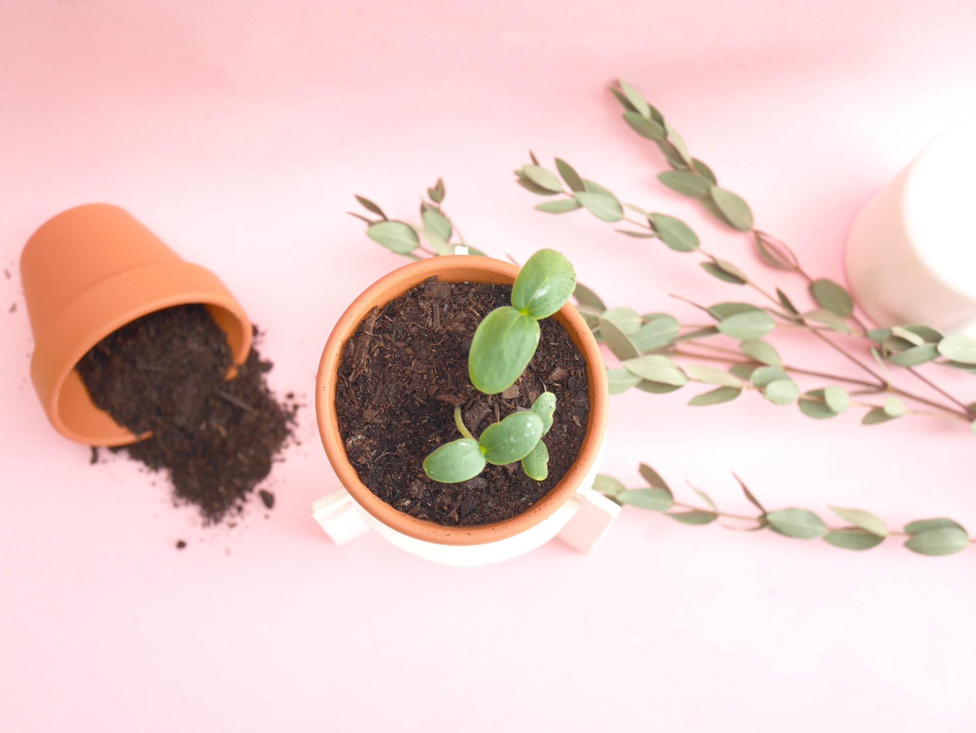 DIY-loiciaitrema-porteplante-13